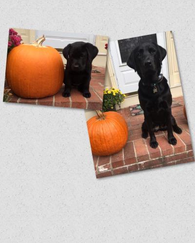 Roise pumpkin 2015 . 2016