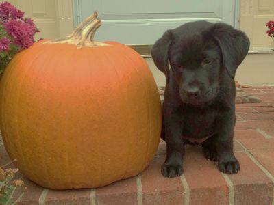 Rosie w pumpkin