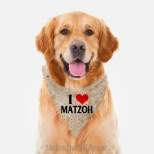 Matzoh dog